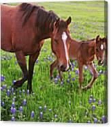Horse On Bluebonnet Trail Canvas Print
