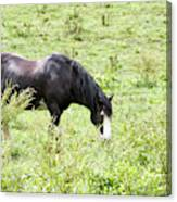 Horse Print 828 Canvas Print