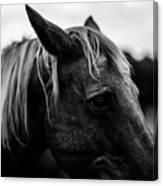 Horse Up-close Canvas Print
