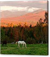 Horses Grazing During The New England Canvas Print