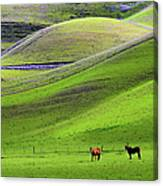 Horses In Hill Country Canvas Print