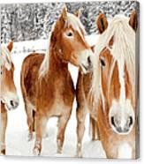 Horses In White Winter Landscape Canvas Print