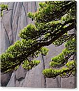 Huang Shan Landscape, China Canvas Print