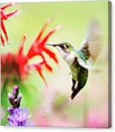 Hummingbird Fancy Canvas Print