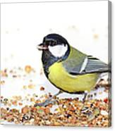 Hungry Bird Canvas Print