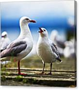 Hungry Gull Canvas Print