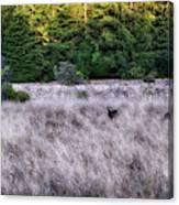 I Spy 4 Deer Canvas Print