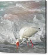 Ibis And A Tinted Sea Canvas Print