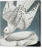 Iceland Falcon Or Jer Falcon By Audubon Canvas Print
