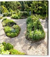 If Gulliver Had A Herb Garden Canvas Print