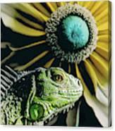 Iguana And Sunflower Canvas Print
