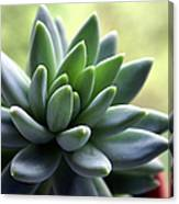 In Focus View Of Green Houseplant With Canvas Print