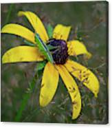 In The Meadow Canvas Print