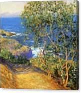 Indian Tobacco Trees La Jolla 1916 Canvas Print