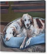 Irish Red And White Setters - Archer Dogs Canvas Print