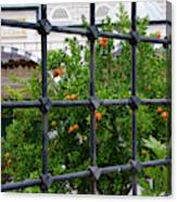 Iron Fencing Canvas Print