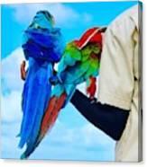 Island Birds  Canvas Print