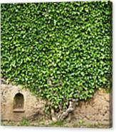 Ivy On A Wall Of Villa Cimbrone, Ravello Canvas Print