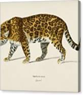 Jaguar  Panthera Onca  Illustrated By Charles Dessalines D' Orbigny  1806-1876  Canvas Print