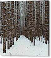 January Forest Canvas Print