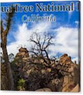 Joshua Tree National Park, California Box Canyon 02 Canvas Print