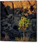 Joushua Sunset 1 Canvas Print