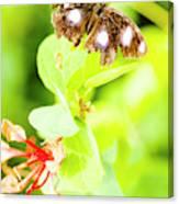 Jungle Bug Canvas Print