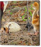 Just Hatching Canvas Print