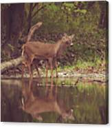 Kissing Deer Reflection Canvas Print