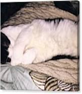 Kitty Kitty Canvas Print