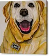 Labrador Retriever Drawing Canvas Print