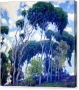 Laguna Eucalyptus 1917 Canvas Print