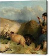Lassie Herding Sheep Canvas Print