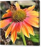 Last Cone Flower Canvas Print