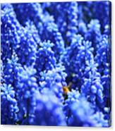 Lavender Field With Bee Canvas Print