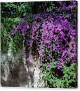 Lavender Pot Canvas Print
