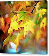 Leaf Therapy Canvas Print