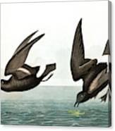 Least Stormy Petrel, Thalassidroma Pelagica By Audubon Canvas Print