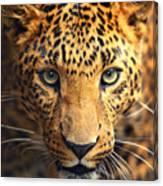 Leopard Portrait Canvas Print