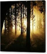 Light In The Woods Canvas Print