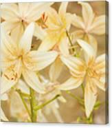 Lilycrest Dainties Canvas Print