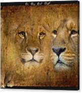 Lions No 02 Canvas Print