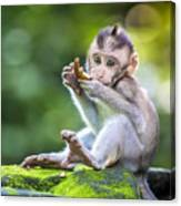 Little Baby-monkey In Monkey Forest Of Canvas Print