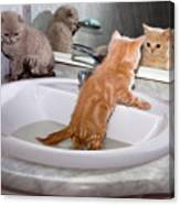 Little Kittens Bathing In The Sink Canvas Print