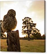 Little Owl Sunset Canvas Print