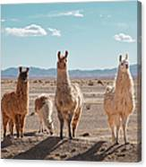 Llamas Posing In High Desert Canvas Print