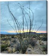 Lone Bush - Sunrise Canvas Print
