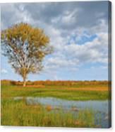 Lone Tree By A Wetland Canvas Print