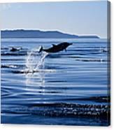 Long-nosed Common Dolphin,delphinus Canvas Print