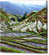 Lonji Rice Terraces Canvas Print
